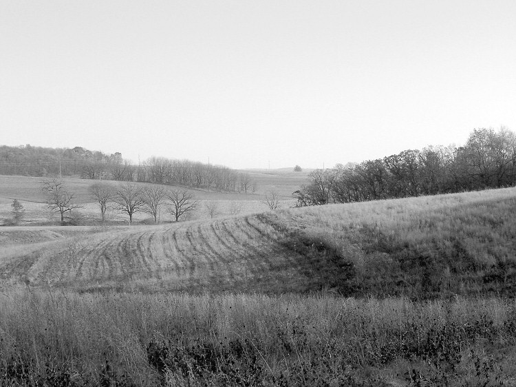 Prairie at New Glarus Woods