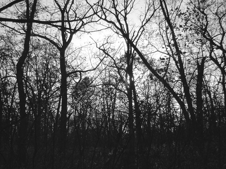 New Glarus Woods in silhouette