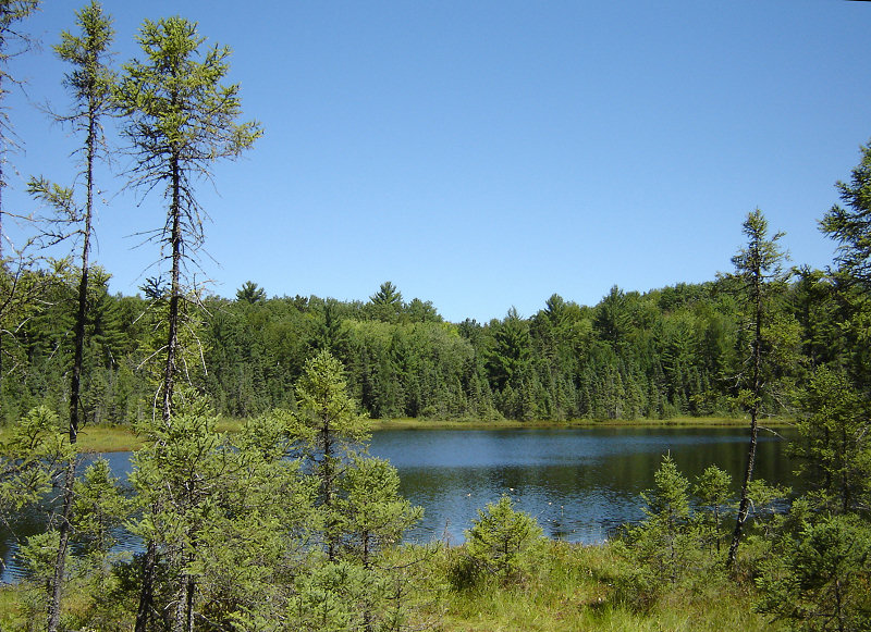 Pond surrounded by pine trees