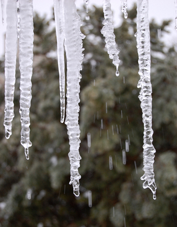 Large icicles dripping