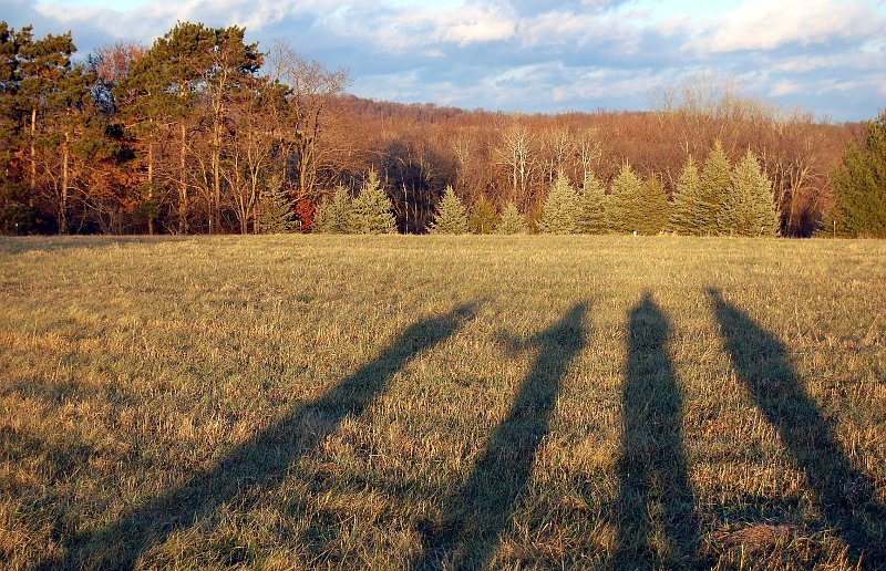 Long shadows of four people