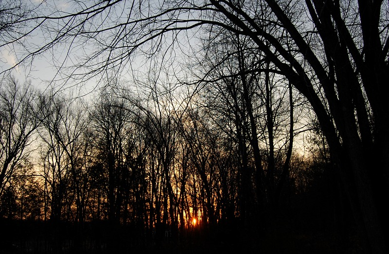 sun setting through bare trees