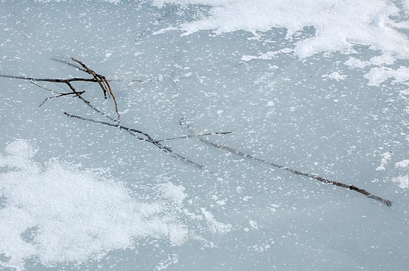 sticks frozen in ice