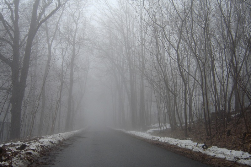 foggy tree lined road