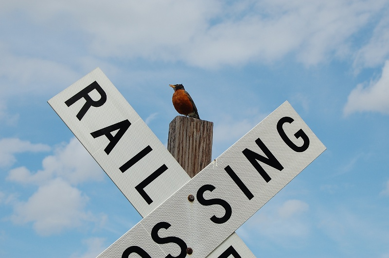 robin on a railroad crossing sign
