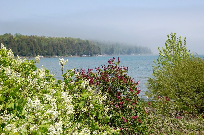 fog rolling onto the flowered shore