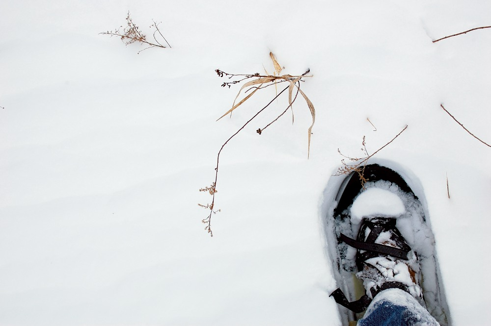 snowshoe in snow