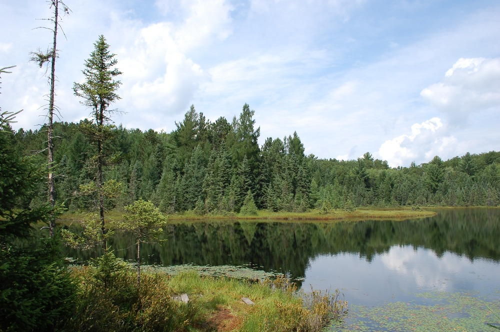Pond near Big Muskellunge Lake
