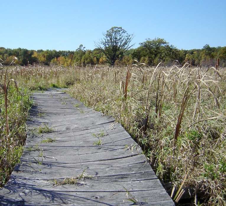 Boardwalk and prairie grass