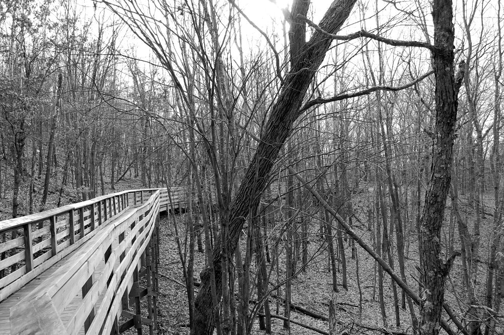 hillside boardwalk through the trees