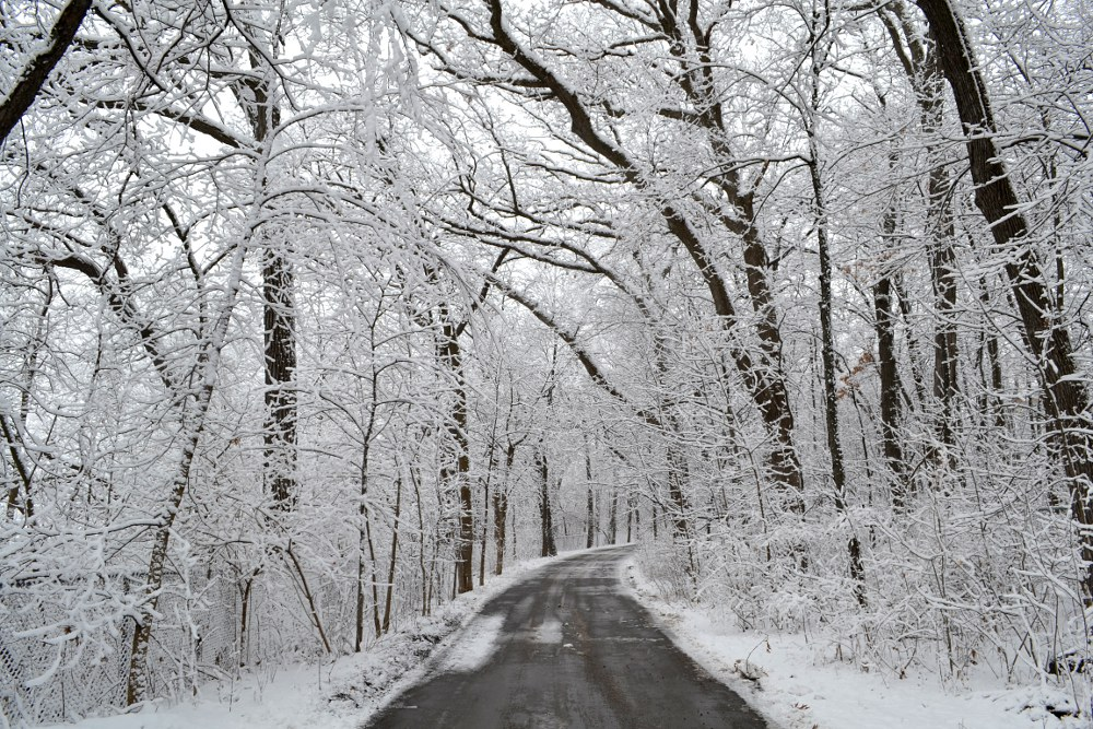 road with snow covered trees