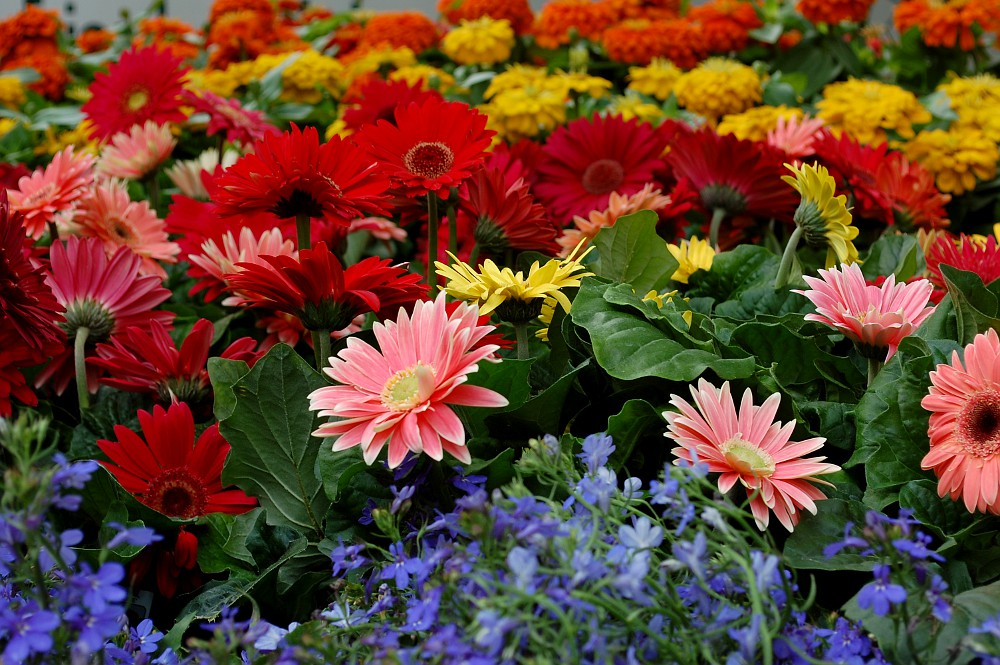 colorful groupings of flowers