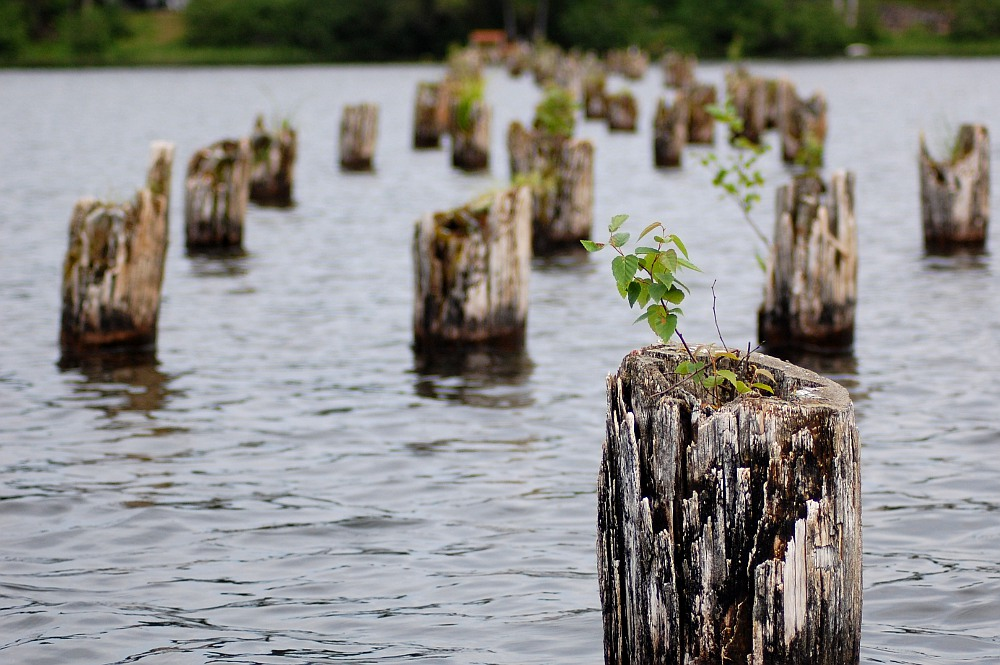 plant growing on old dock support post