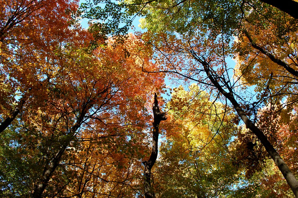 autumn trees under the forest canopy