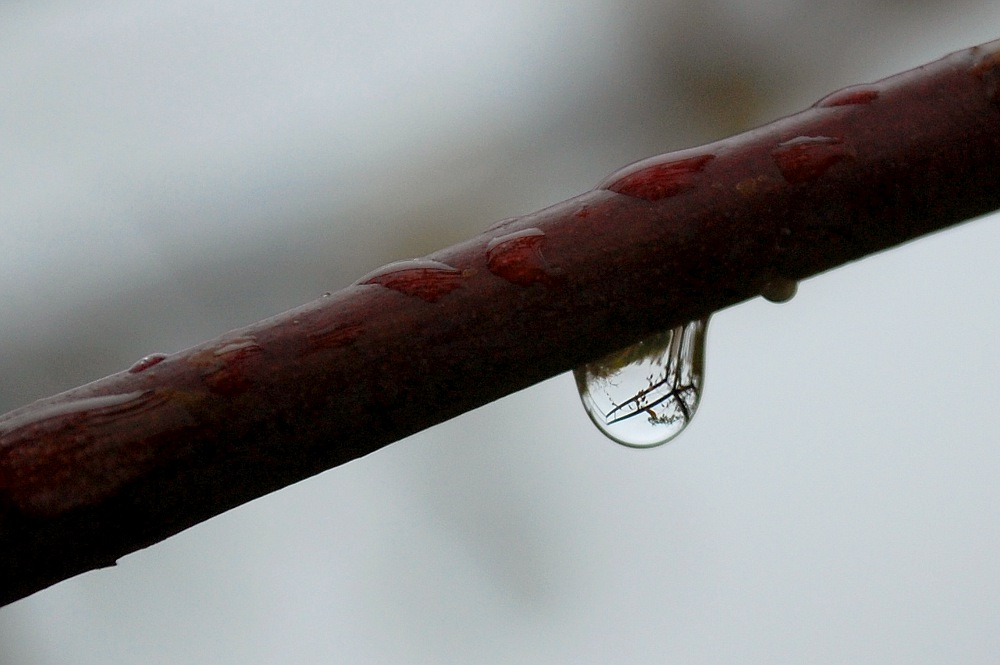 Raindrop on a branch