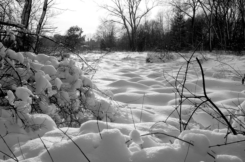 snow covered pond