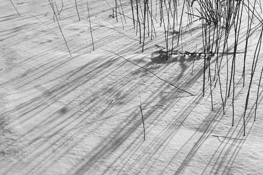 Grass shadows on snow covered prairie