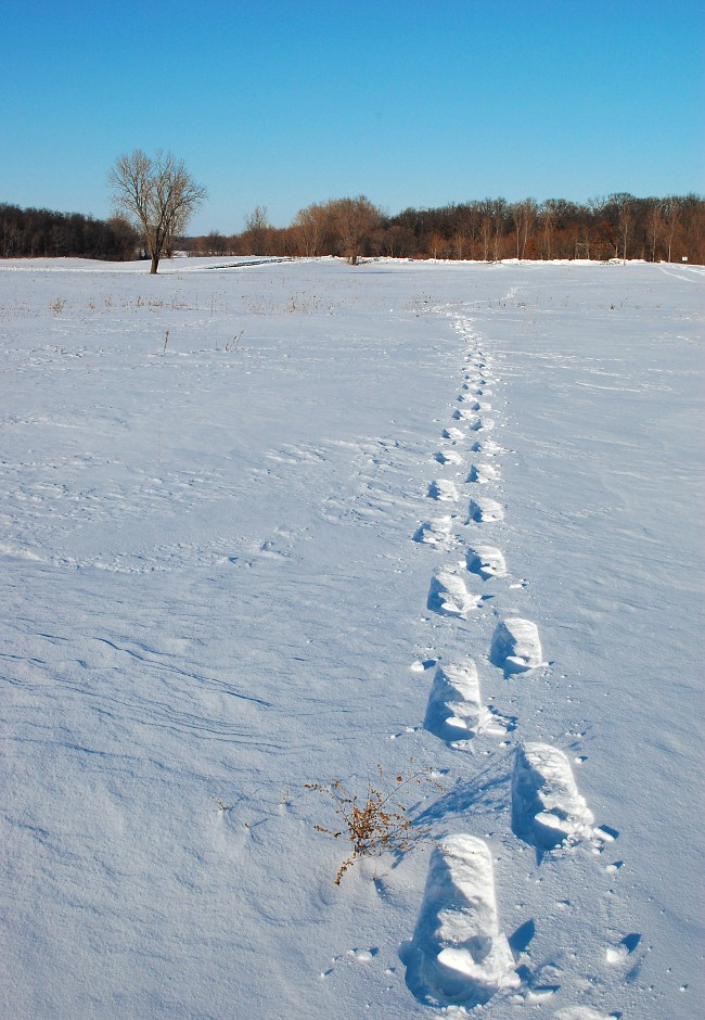 Snow shoe tracks in McCarthy County Park