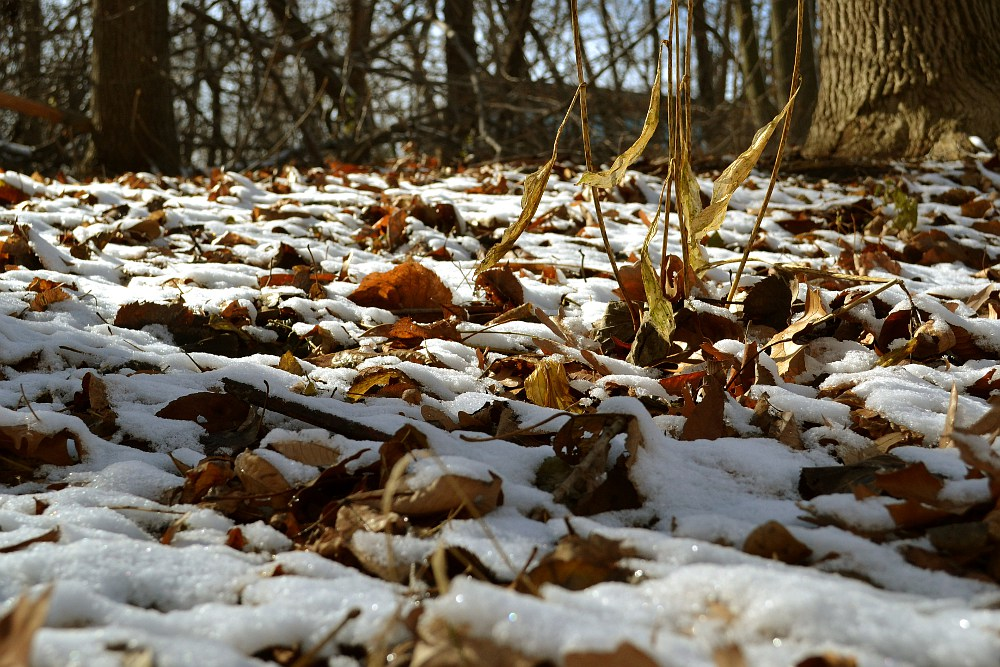 small hill with leaves and snow