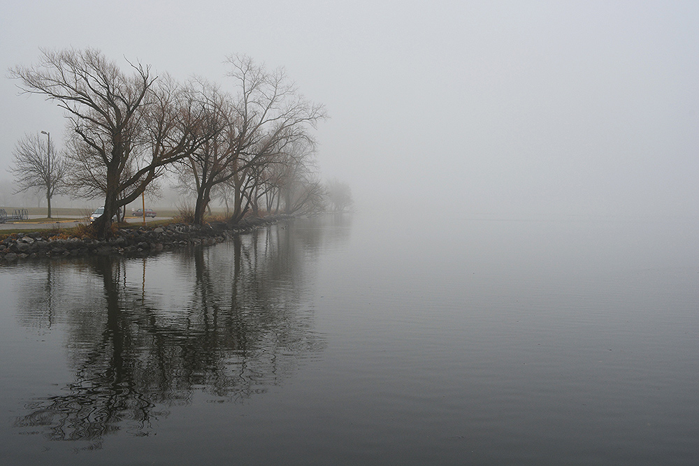 Trees along a foggy lakeshore