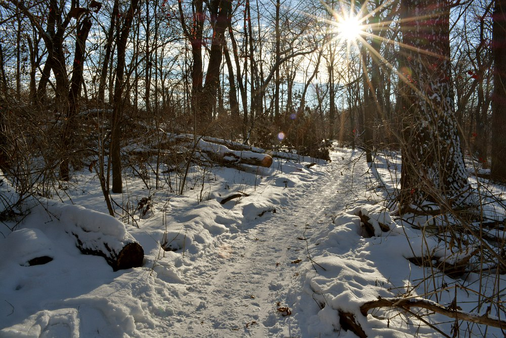Sun shining through a snow covered, wooded hiking trail