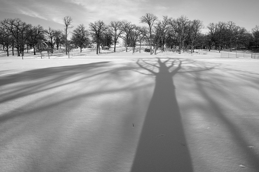 tree shadows on a snow covered field