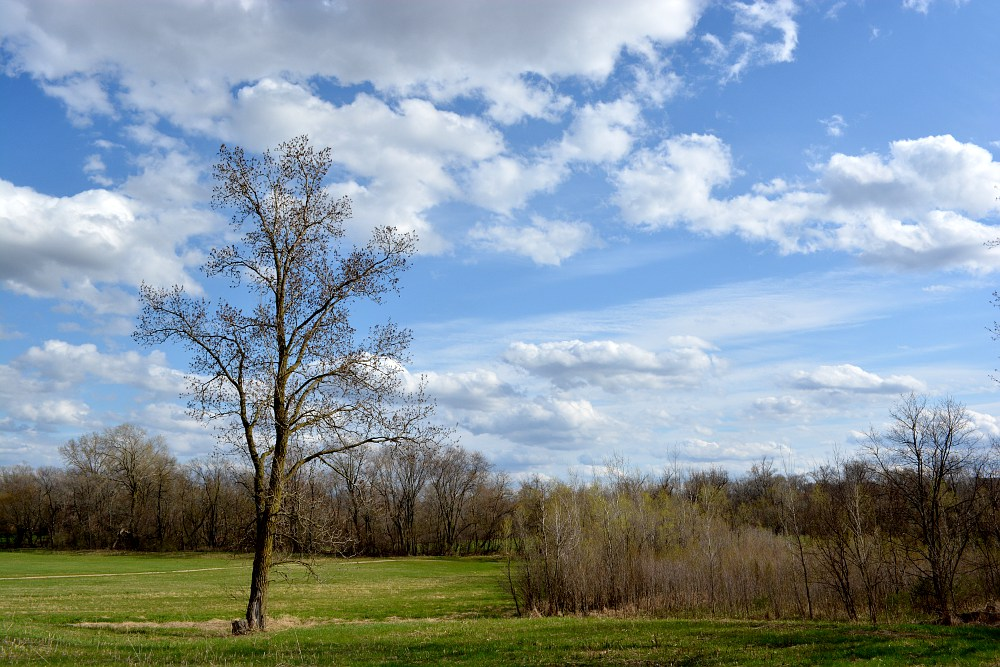 partly cloudy sky above a spring tree
