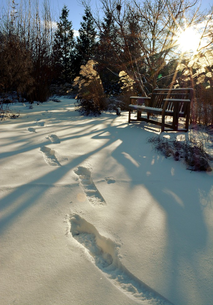 Footprints in a snow covered Olbrich Gardens