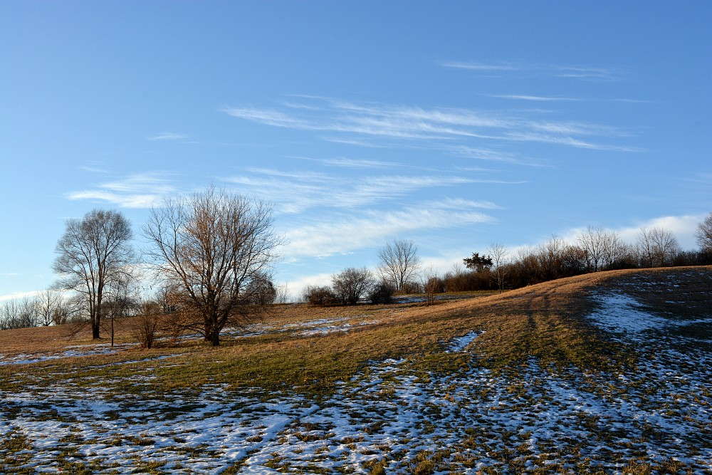 hill with trees under a blue sky