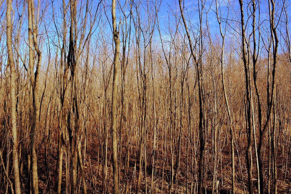 In the middle of a bare thicket