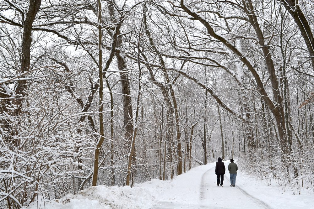 Two people walking through the woods after a snowstorm