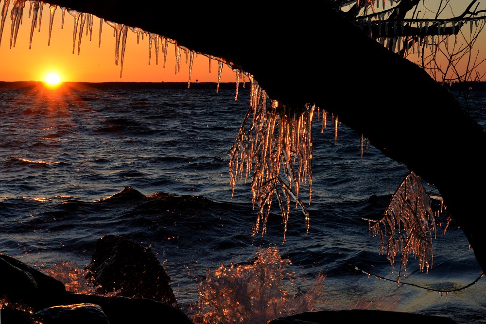 Icicles on a lakeside tree at sunset