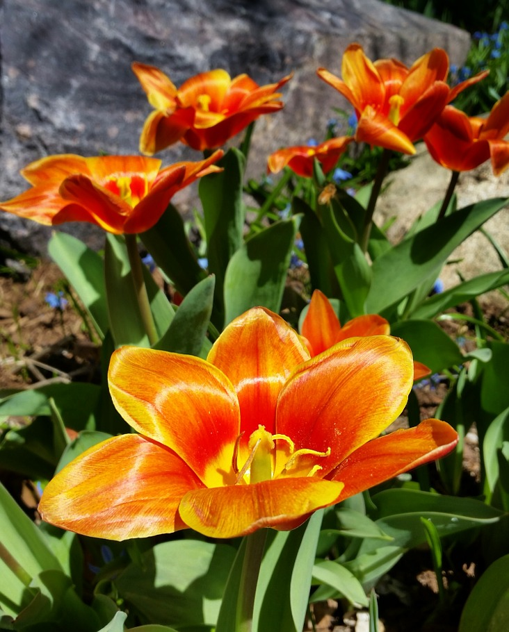 orange flowers blooming