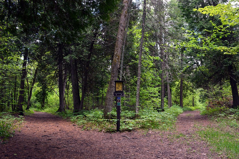 Forest hiking trail, splitting into two trails