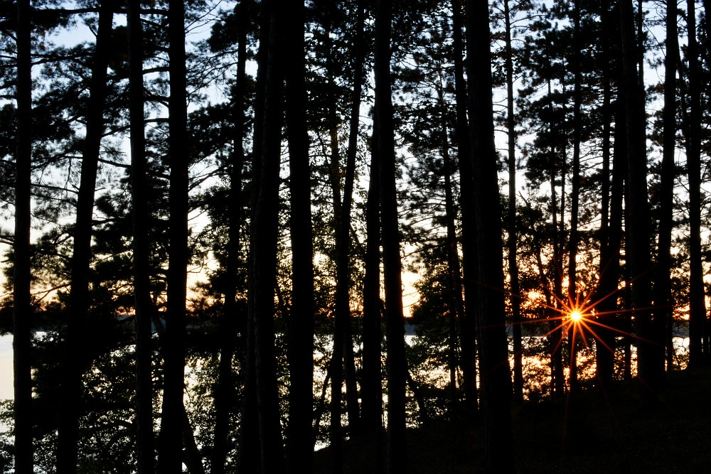 Sun setting though trees along side a lake