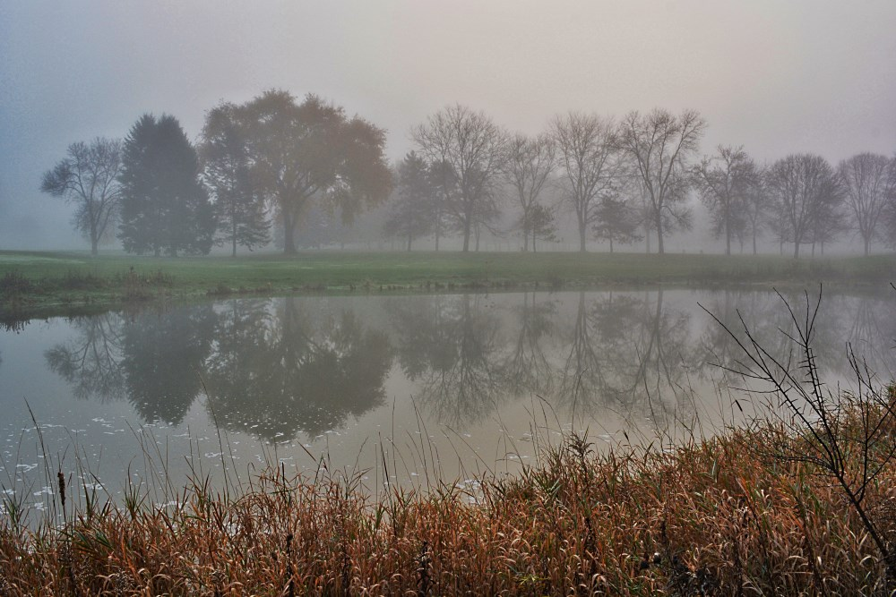 Trees reflecting in a pond on a foggy morning