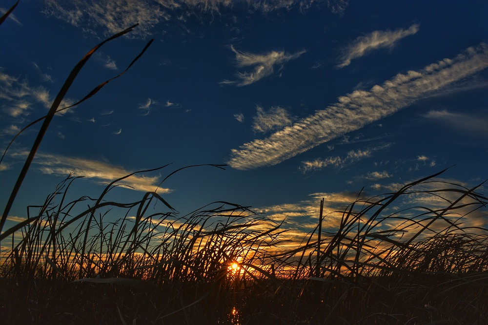 Sun setting on a grassy marsh