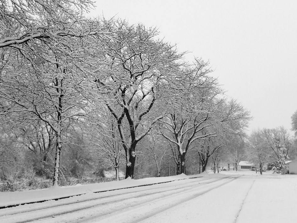 Tree lined street, covered with snow