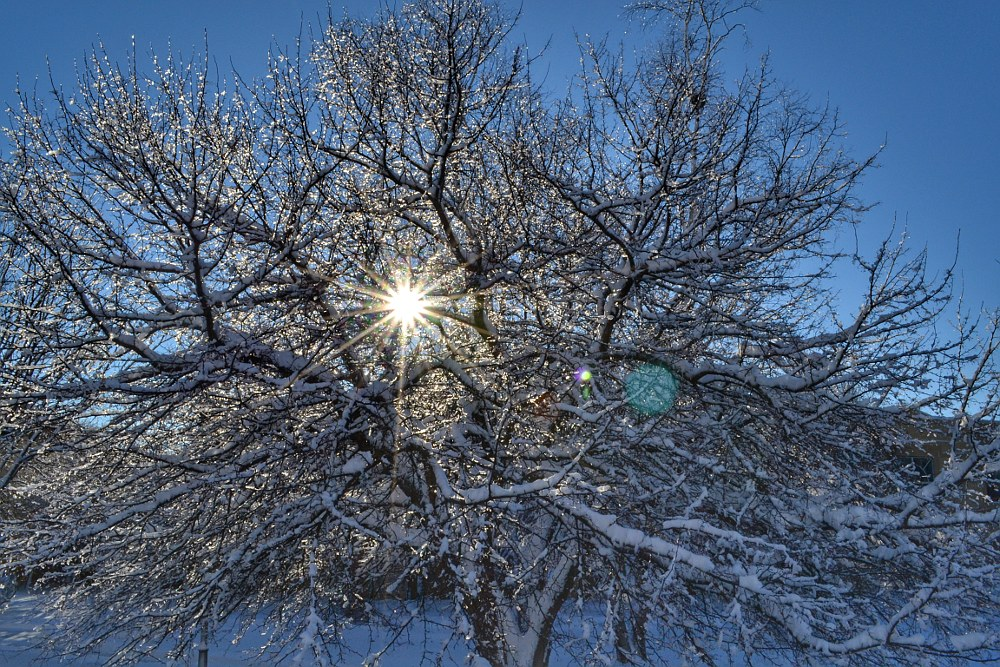 Sun shining through a snow and ice covered tree