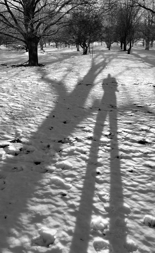 Shadows of a tree and person on snow