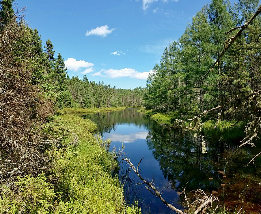 Lagoon surrounded by pine trees and foliage