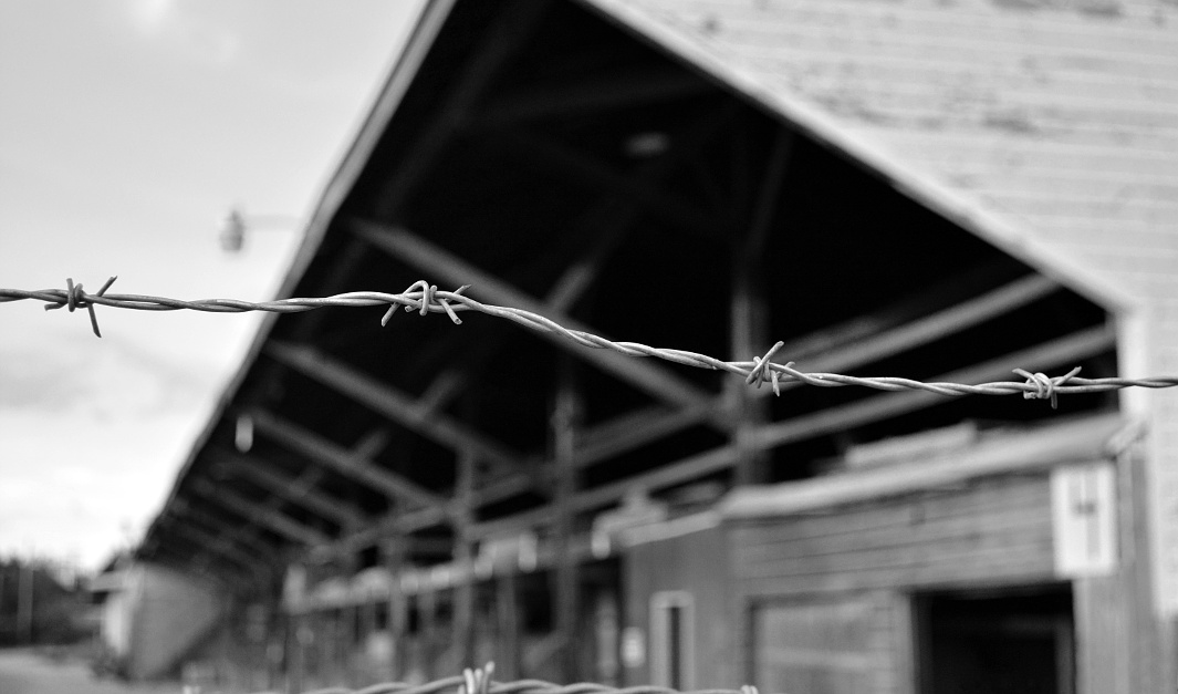 Barbed wire in front of an abandoned lumber yard