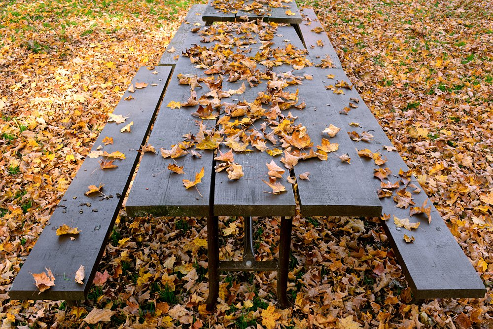 fallen leaves on top of a picnic table
