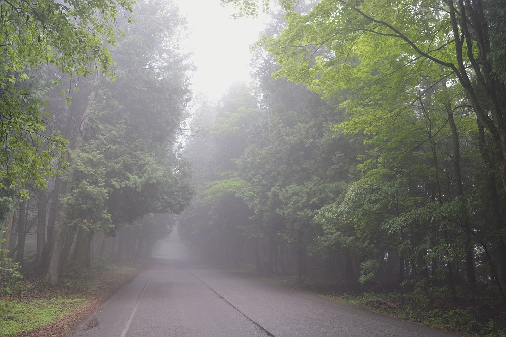 Green trees line a foggy road that leads up a hill