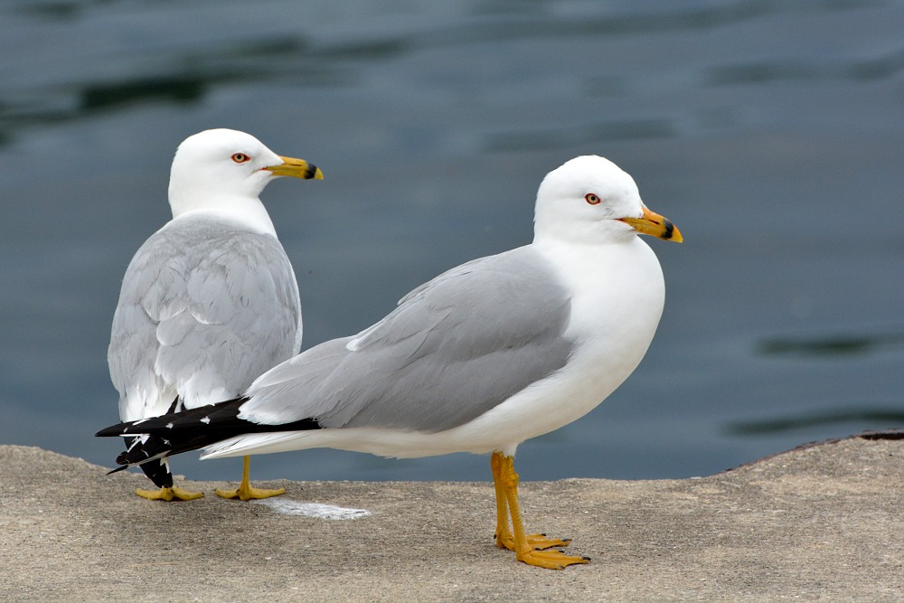 Two seagulls standing on a dock