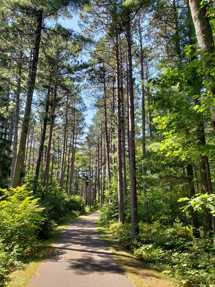 Bike trail leading through a tall pine forest