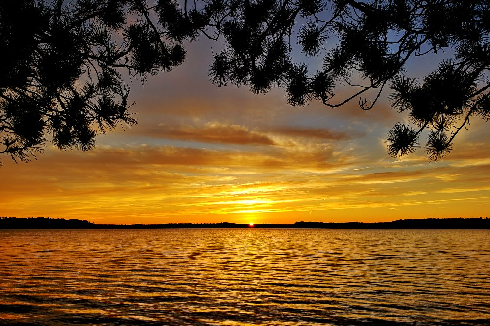 Yellow sunset over a lake with pine branches overhead