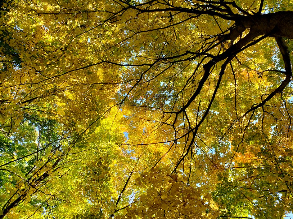 Looking up at surrounding colorful autumn leaves on trees
