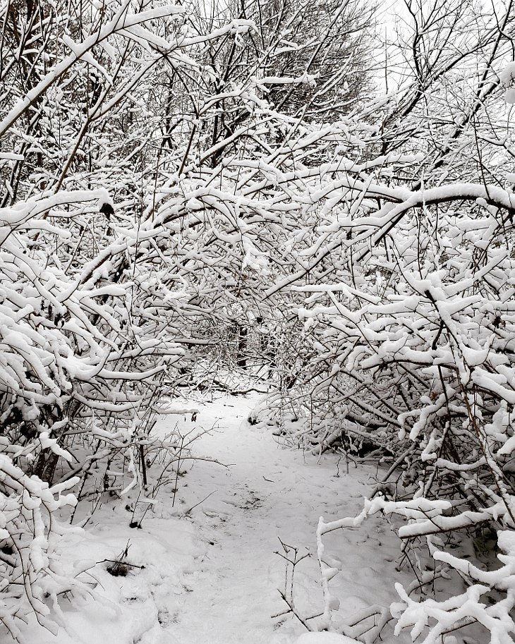 Hiking trail in a wooded area covered with snow