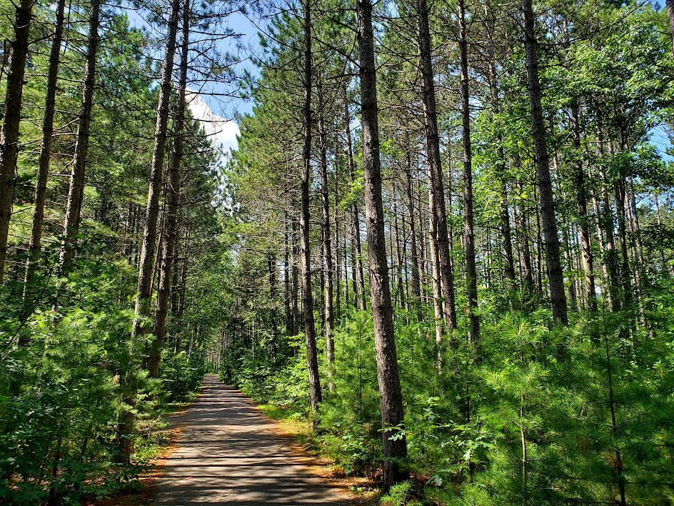 Paved bike trail leading straight into a forest of tall pine trees
